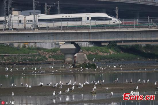 Sea birds and high-speed trains in harmony